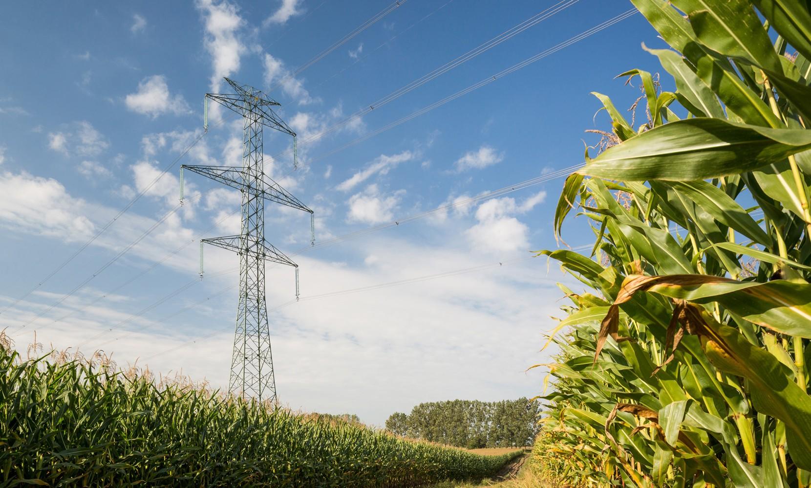 polskie sieci energetyczne strona